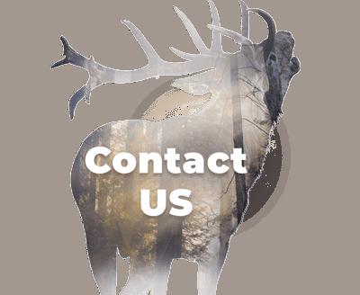 shafford_contact_gr